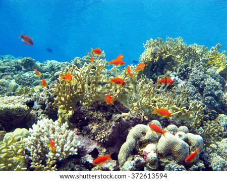 coral reef with hard and fire coral and exotic fishes at the bottom of tropical sea, underwater - stock photo