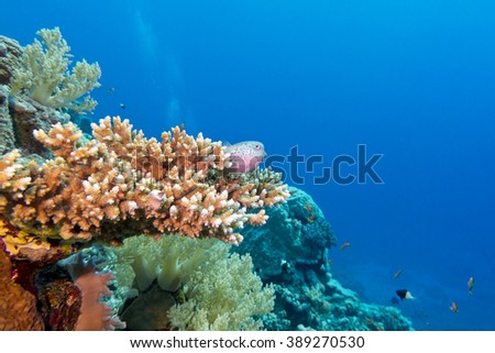 coral reef with hard coral and exotic fishes at the bottom of tropical sea on a blue water background, underwater - stock photo