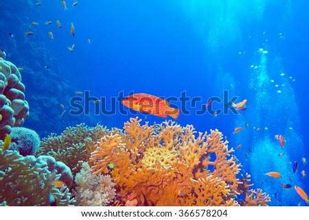coral reef with red exotic fish cephalopholis at the bottom of tropical sea - stock photo