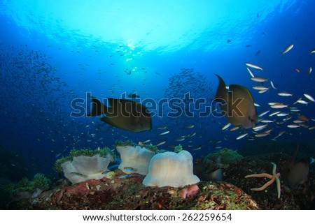 Coral reef with sea anemones and fish - stock photo