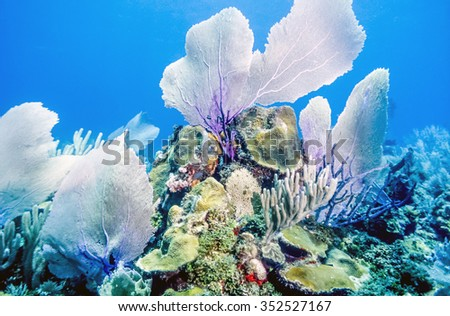 Coral reef with sea fans off the coast of Bonaire