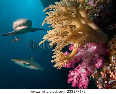 Coral reef with sharks - stock photo
