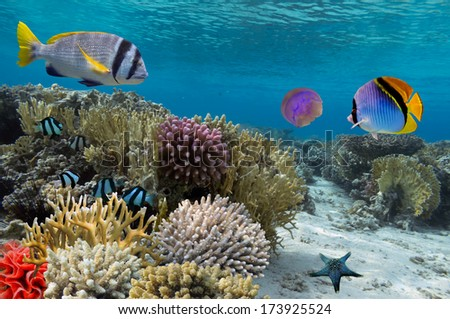 Coral reef with soft and hard corals - stock photo