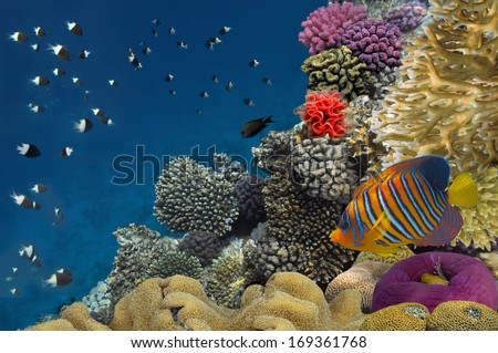 Coral reef with soft and hard corals with exotic fishes anthias - stock photo