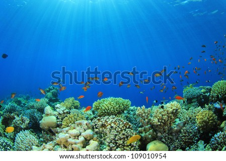 Coral Reef with Tropical Fish in the Ocean - stock photo
