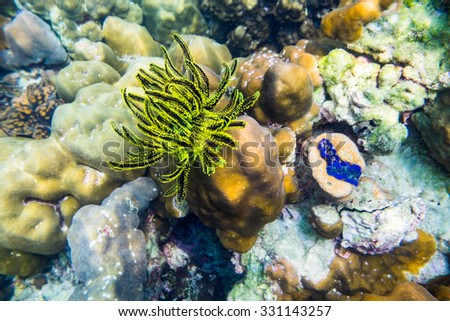 Coral reef yellow black underwater