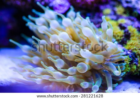 coral reefs - stock photo