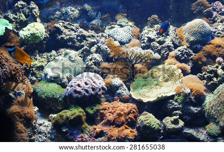 Coral reefs and tropical fishes at the bottom in the sunlight - stock photo