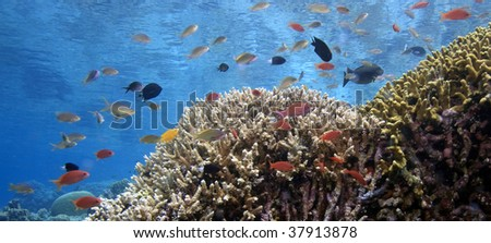 Coral reefs off the island of Bunaken in North Sulawesi Indonesia