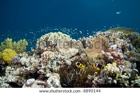 coralhead with anemone
