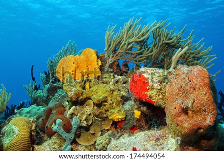 Corals against Surface, Cozumel, Mexico - stock photo