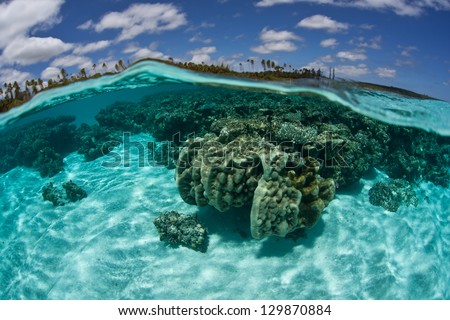 Corals grow just under the surface of the water near Isle de Mare near New Caledonia.  This beautiful island supports a variety of South Pacific invertebrates and fishes. - stock photo