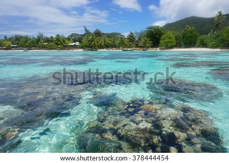 Corals in shallow water seen from above the surface with the shore in background, lagoon of Huahine island , Pacific ocean, French Polynesia