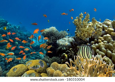 Corals reef - stock photo