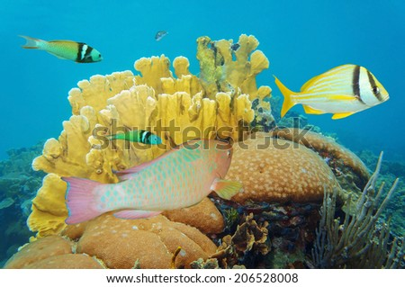 corals under the sea with colorful tropical fish, Caribbean, Mexico - stock photo