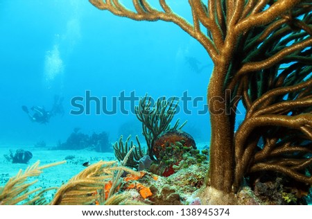 Corals with Divers in the Background, Cozumel, Mexico - stock photo