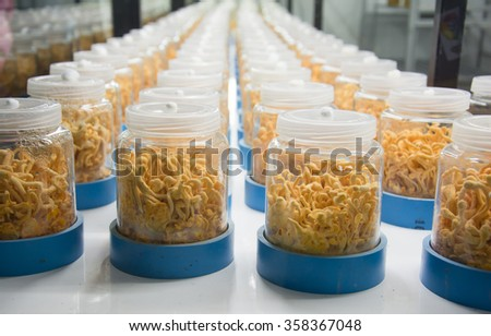 Cordyceps militaris in Glass bottles - stock photo