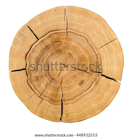 Core of a wooden log isolated on a white background. Top view. Background, texture series.