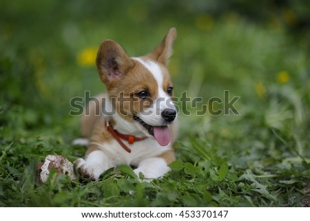 Corgis childhood