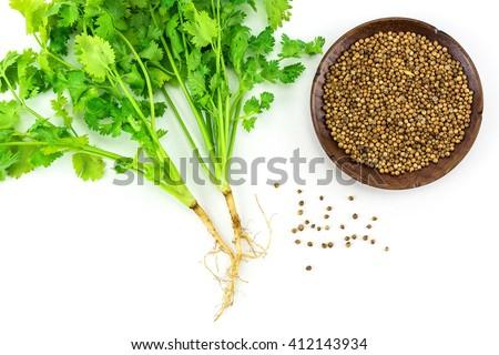 Coriander and coriander seeds  isolated on white background./ Coriander and coriander seeds - stock photo
