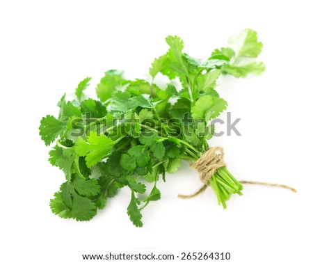 Coriander  fresh greens  cilantroisolated on the white - stock photo