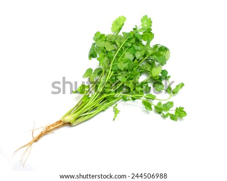 coriander isolated on white background - stock photo