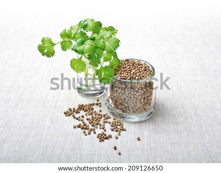 Coriander Leaves And Seeds - Cilantro - Fresh coriander leaves and dried seeds in jars and on white textile made of linen. - stock photo
