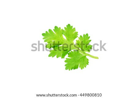 Coriander leaves set in white background.