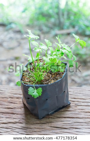 coriander  on a wooden floor and has a background of nature