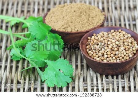 Coriander seeds, coriander powder and fresh coriander on wicker surface  - stock photo