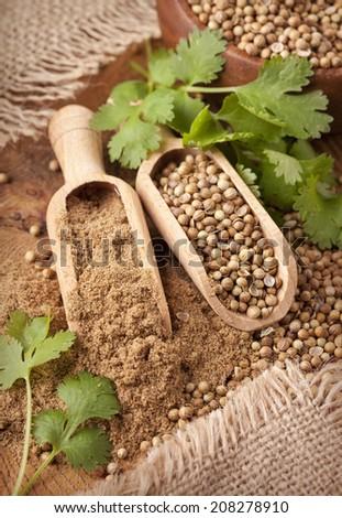 Coriander seeds, fresh coriander and powdered coriander - stock photo
