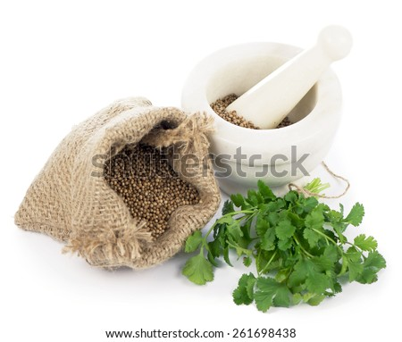 Coriander seeds, fresh coriander leaves and powdered coriander. - stock photo