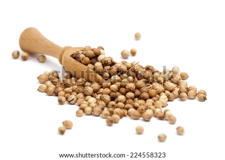 coriander seeds in a wooden spoon