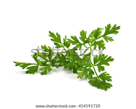 Coriandrum spp.tree, medicinal properties and as a vegetable or used for cooking