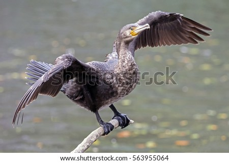 """lake cormorant black singles The a-team there is no plan b"""" vision of lake cormorant middle school: lake cormorant middle school promotes a safe, respectful, challenging, and supportive learning environment that."""