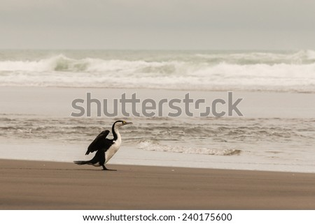 cormorant drying its wings on sandy beach - stock photo