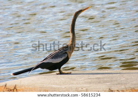 Cormorant drying up in the sun