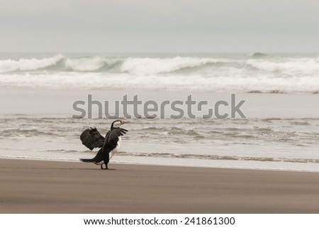 cormorant flapping its wings - stock photo
