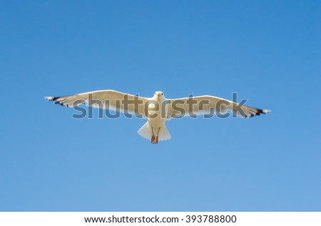 Cormorant flying in the sky over the Black Sea