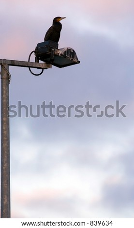 cormorant perched on lamp post