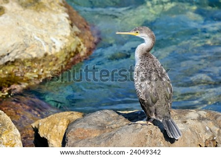 cormorant sitting on the rock near the sea