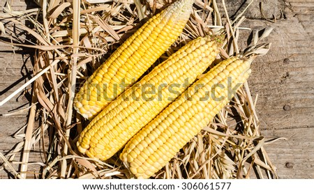 Corn and hay