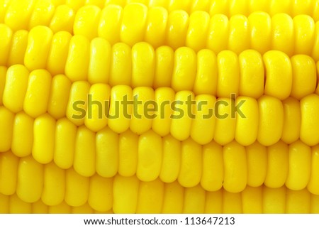 corn background, Macro closeup for design work