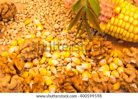 Corn cob, wheat, nuts on the wooden plate with green nut leaves - stock photo