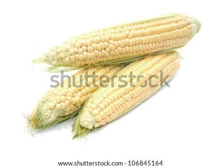 Corn cobs on white background - stock photo