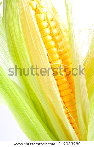 Corn con on white background  - stock photo