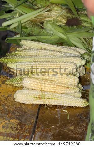 corn crop - stock photo