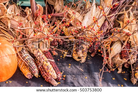 Corn display in Autumn