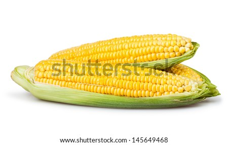 corn ear group on white background - stock photo