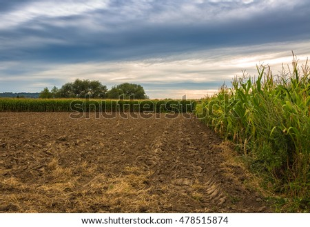 Corn field aerial with blue sky and dark earth